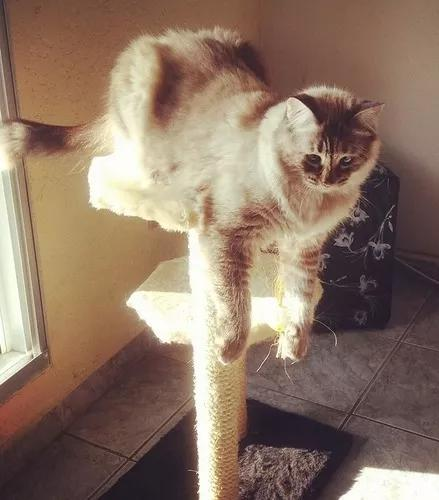 Arranhador brinquedo gato 2 bases