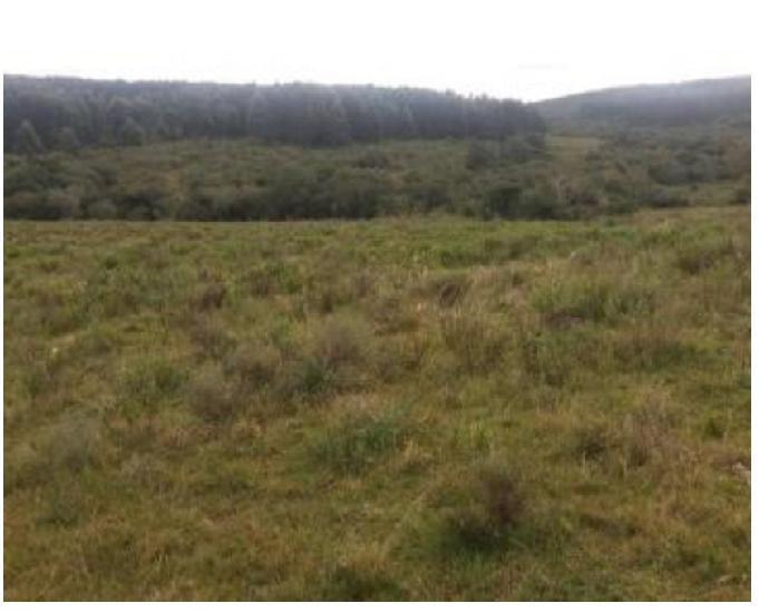 Vende-se fazenda de 230 hectares em encruzilhada do sul-rs