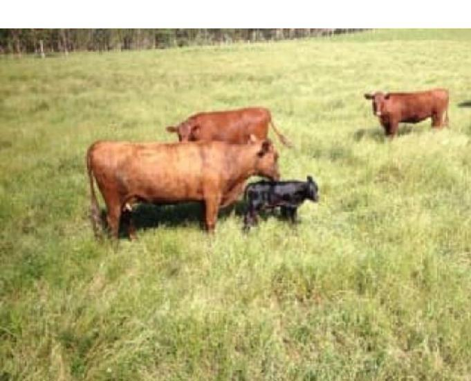 Vende-se fazenda de 300 hectares em encruzilhada do sul-rs