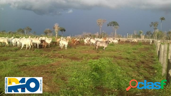 Fazenda a venda, para pecuária 2.516 ha município de óbidos pa, formada