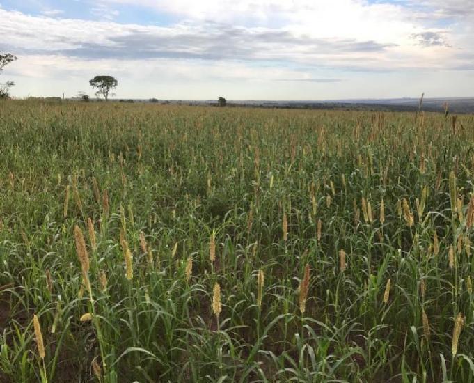 Excelente fazenda com 1.800 hectares na região de sonora ms