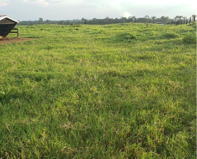 Fazenda de 1.990 hectares