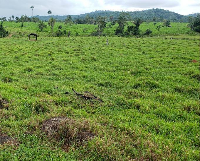Fazenda de 254 hectares todo formado