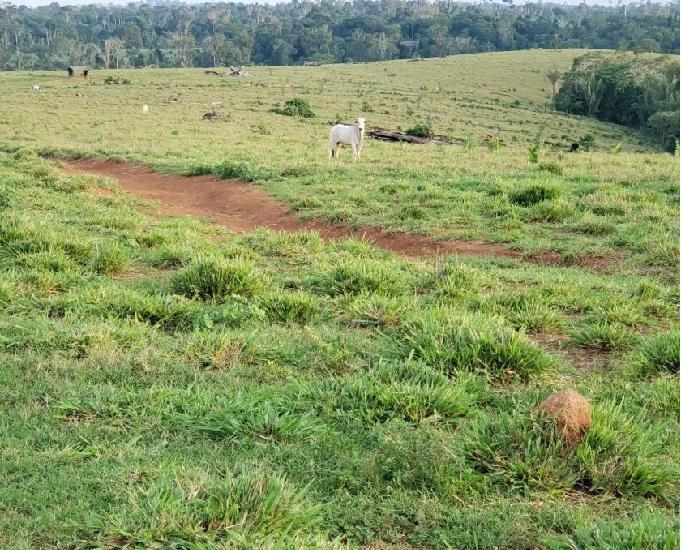 Fazenda de 308 hectares toda formada.