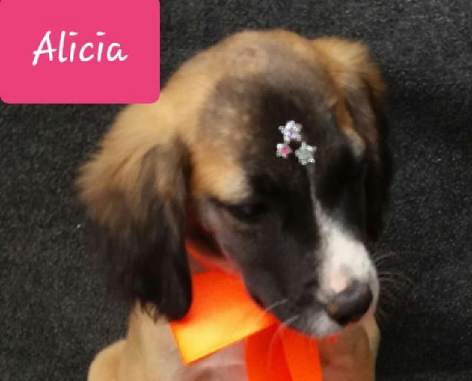 Alicia linda filhote femea lar responsável