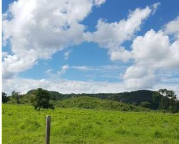 2200 hect em campo verde terra de bacuri com 1700 formados