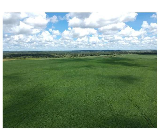 253 alq. estuda prazo e proposta terra plana vermelha argilo