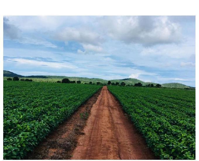 255 alq. 60 soja planta + 140 argila 35% estuda condições