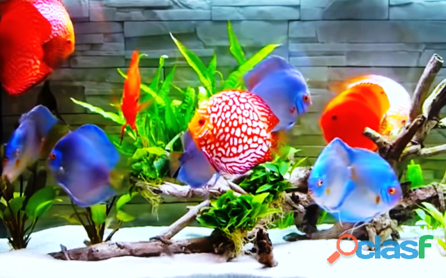 Curso online aquarista de sucesso !!!