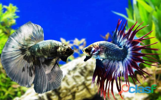 Curso Online Aquarista de Sucesso !!! 1