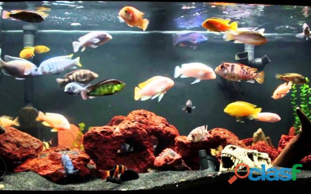 Curso Online Aquarista de Sucesso !!! 2