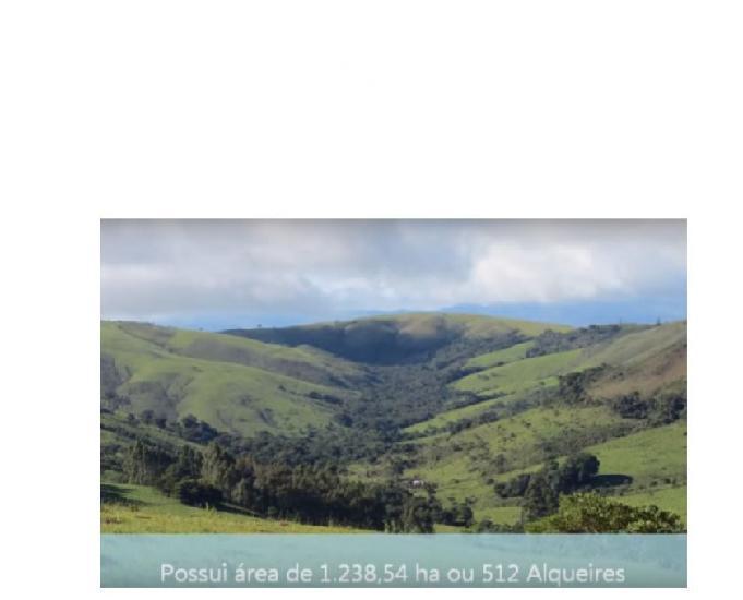 Fazenda região de capitólio minas gerais gado 512