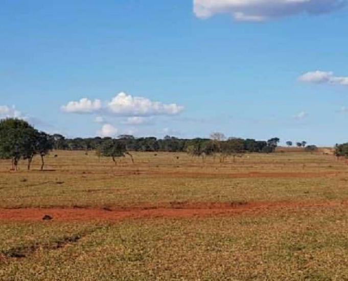 Oportunidade de fazenda com 500 alqueires em bataguassu ms