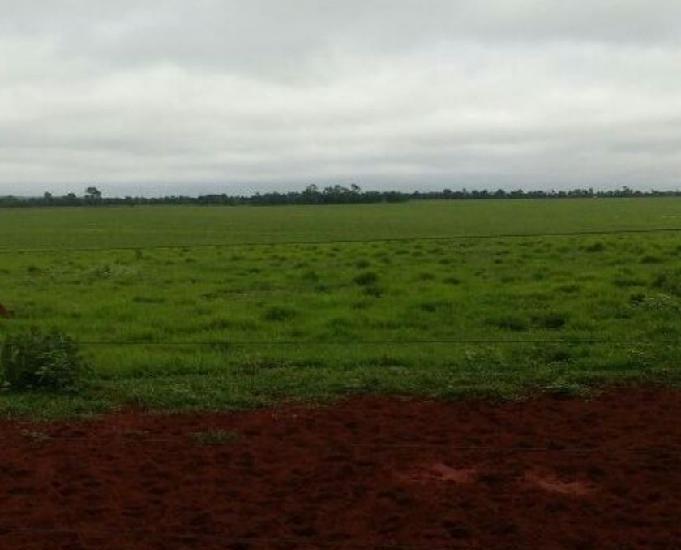 Oportunidade de linda fazenda com 2.134 hectare em sonora ms