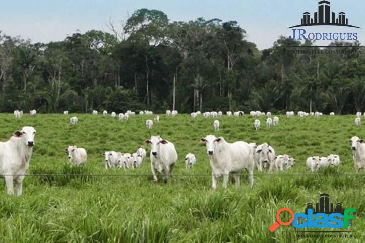 Fazenda para criação de gado e lavoura em goiás