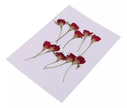 10 peças prensado flor seca meio corte rosa flor
