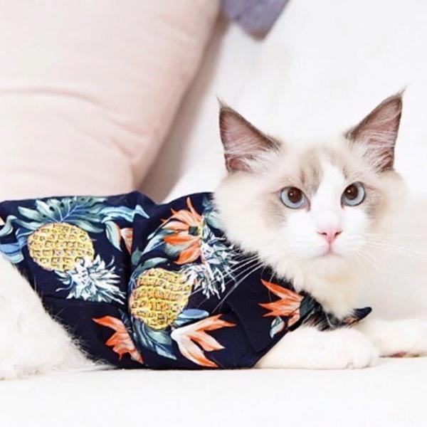 Roupa para gato/ camisa hawaii