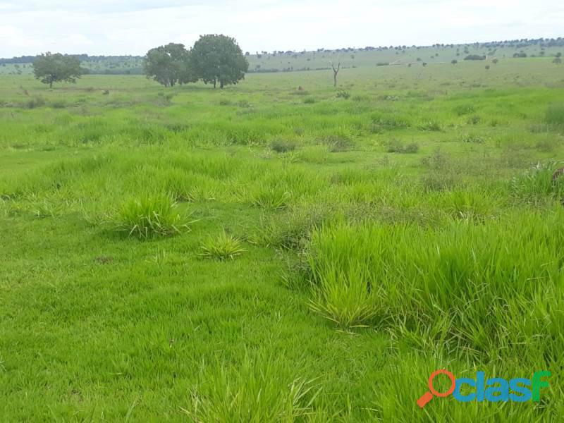 198 alq. terra agricultavel vermelha plana argila 35% com entrada oferta condições