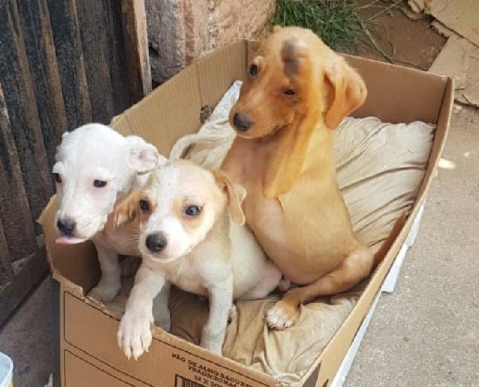 Filhotinhos porte pequeno a médio a procura de um lar