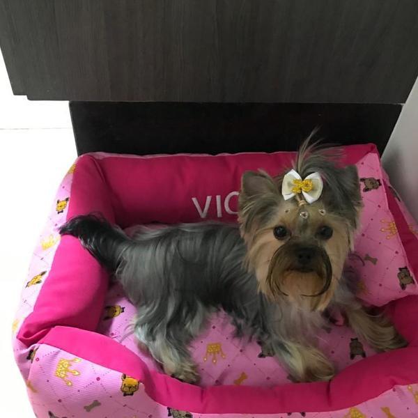 Cama pet cão e gato com nome bordado e almofada (60x40cm)