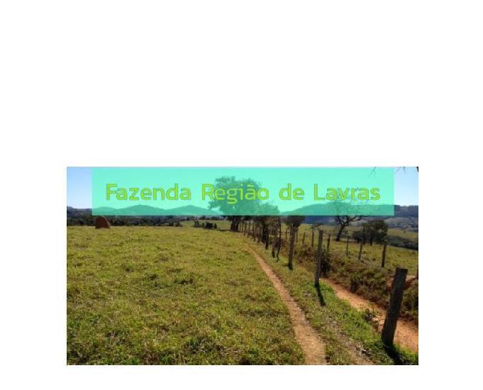 Fazenda 300 hectares região de lavras em minas gerais pasto