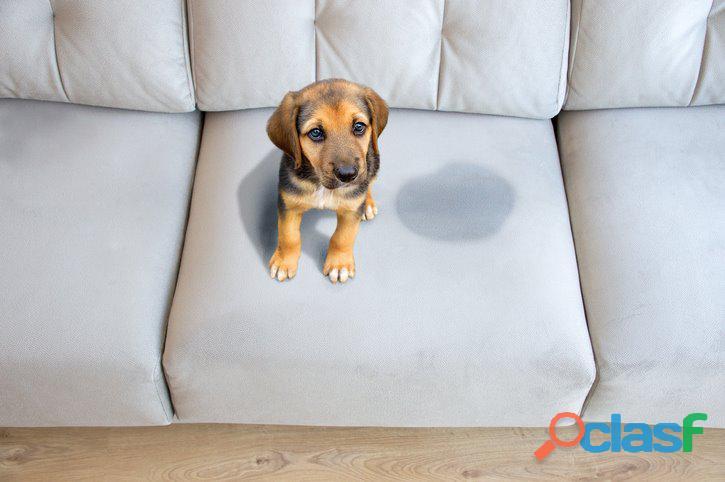 Meu sofá favorito protegido