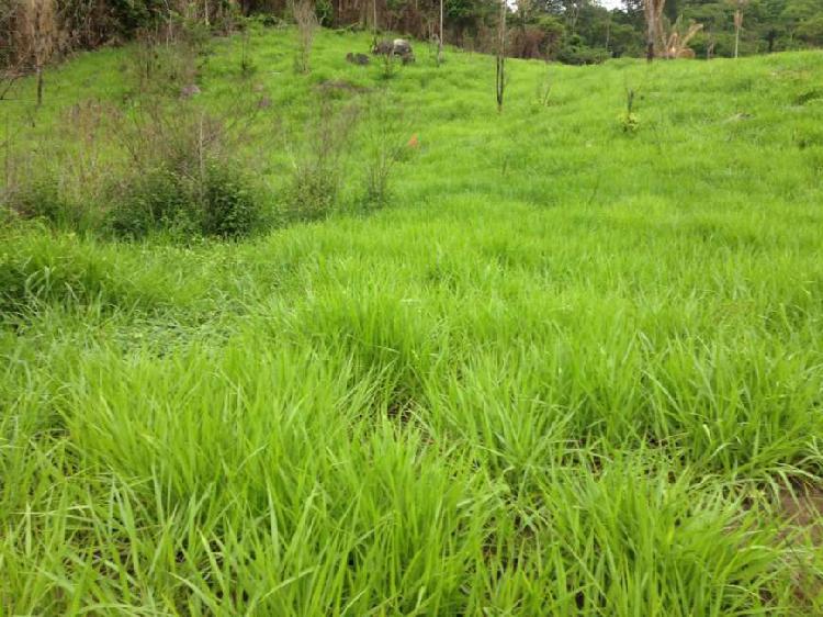 Fazenda vale do boi aptdão pecuaria