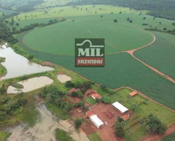 Rea irrigada (pivô central) fazenda 68 alqueires