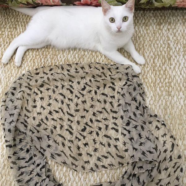 lenço gatinho