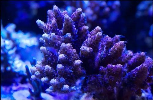 Luminária led aquário marinho hd-70w wi-fi