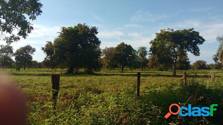 Fazenda de 1.550 hectares à venda no mato grosso do sul com pasto e casa