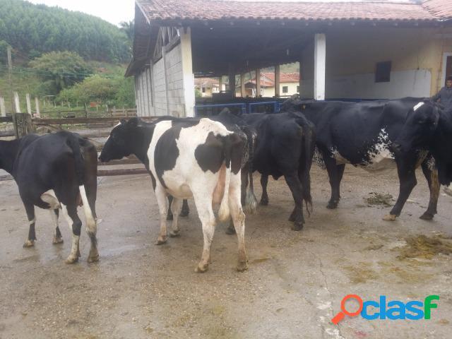 Fazenda leiteira para arrendar em paraibuna com pasto e estrutura