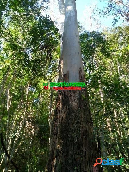 Fazenda de eucalipto madeira