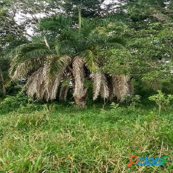 4 Alq. Ótima Para Agricultura Da Irrigação Rio Quente GO 3