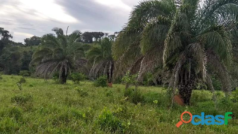 4 Alq. Ótima Para Agricultura Da Irrigação Rio Quente GO 10