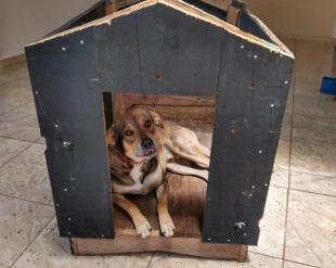 Doação cachorro amigo carinhoso