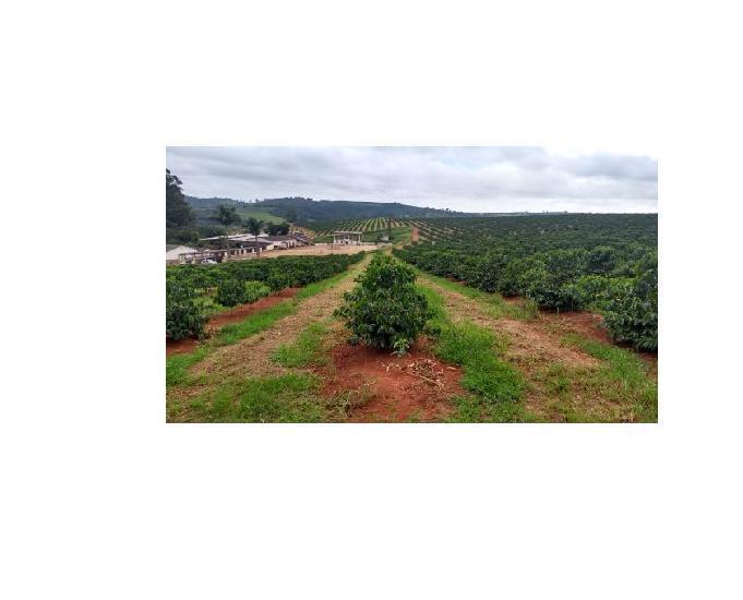 Fazenda café 96,80 hectares boa esperança minas gerais