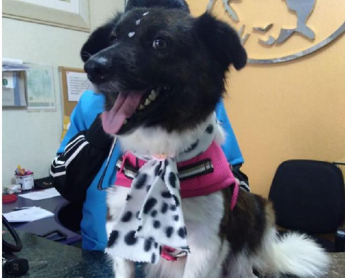 Chiquinha, um doce de cachorrinha a procura de um novo lar