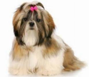 Barber dog pet shop