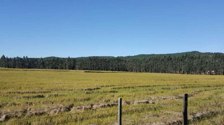Excelente terreno arroizera e pecuária em taió (sc),