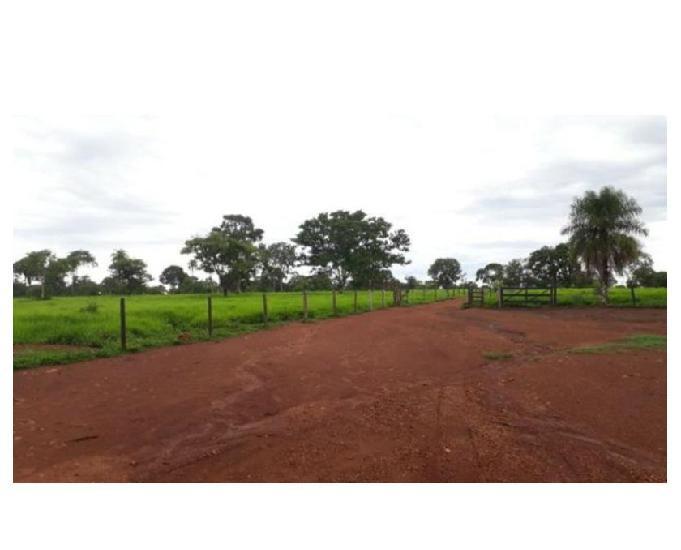 80 alq. cultura preta capacidade p 1800 garrotinhos araguaç