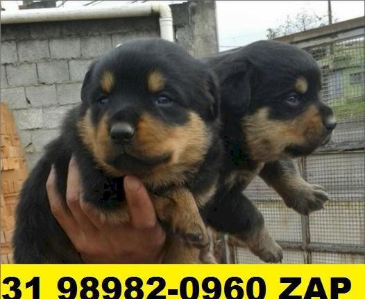 Canil em bh filhotes de cães rottweiler