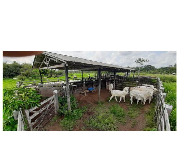 Fazenda de 225 hectares a 90km de belem 1 milhão de reais
