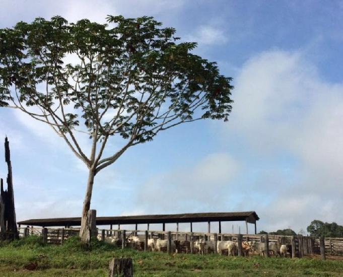 Fazenda de gado em pacajás no pará