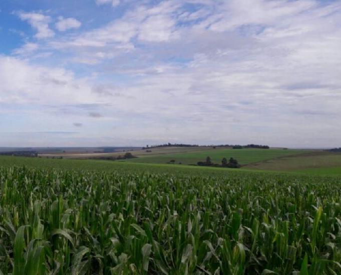 Oportunidade de fazenda com 63 alqueires em mambore pr