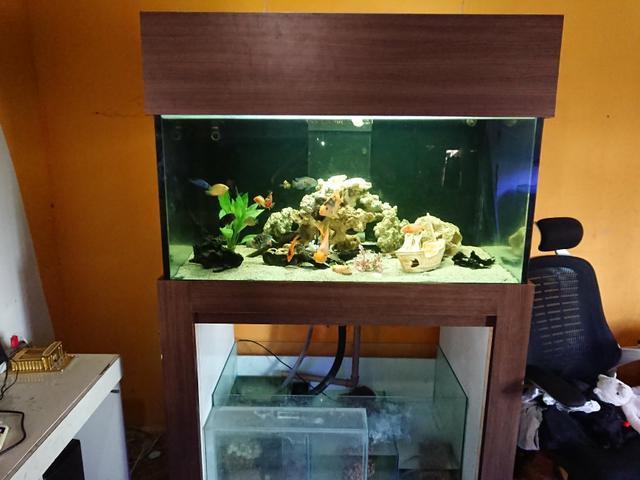 Aquario 120x69x60, 505 litros