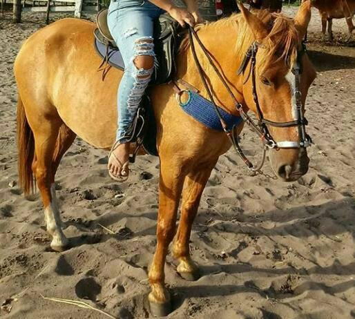 Cavalo 1/2 Manga larga.