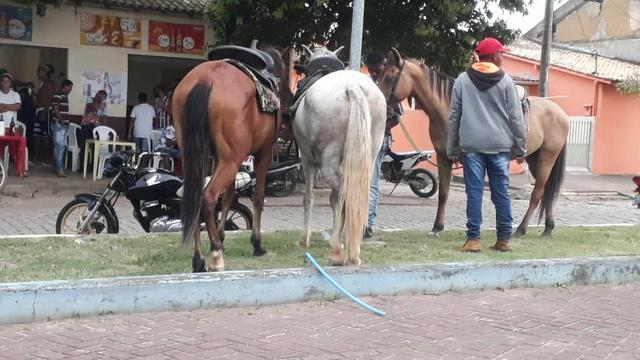 Cavalo de sela, charrete e carroça