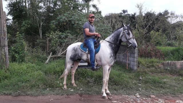 Cavalo manga larga mineiro