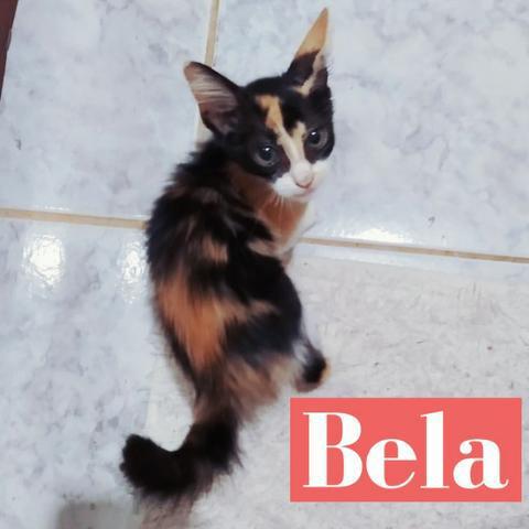 Doação gato fêmea filhote (2 meses)